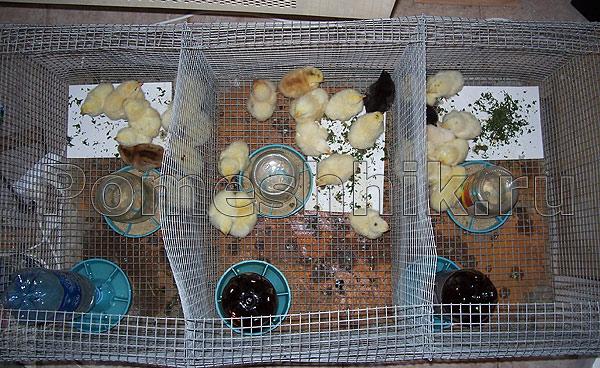 Как сделать клетку для цыплят-бройлеров