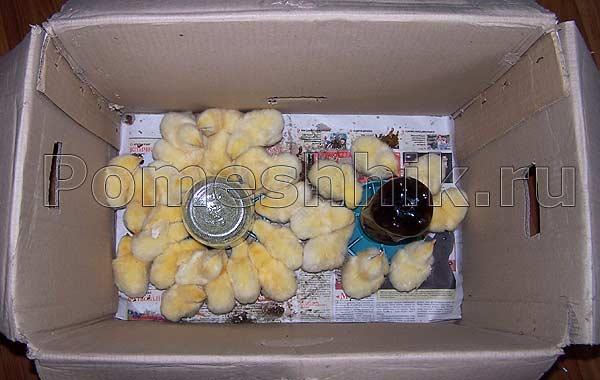 Инкубатор из картонной коробки  советы 170
