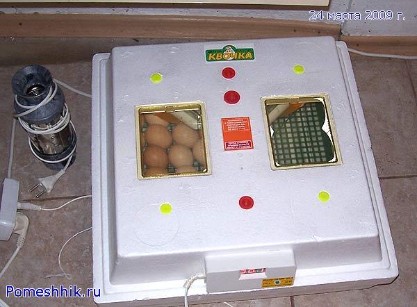 """мини-инкубатор """"Квочка"""""""