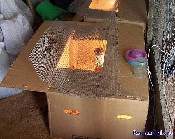 Самодельная коробка для цыплят